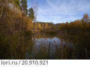 Купить «wood forest autumn fall bavaria», фото № 20910921, снято 19 декабря 2018 г. (c) PantherMedia / Фотобанк Лори
