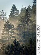 Купить «Cloud in evergreen trees, Mineral King, Sequoia National Park, California.», фото № 21012353, снято 20 октября 2009 г. (c) age Fotostock / Фотобанк Лори