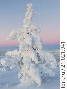 Купить «winter landscape, Lapland, Sweden», фото № 21021941, снято 21 августа 2019 г. (c) age Fotostock / Фотобанк Лори