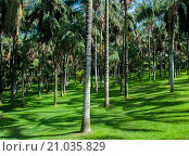 Кокосовые пальмы. Стоковое фото, фотограф Юрий Александров / Фотобанк Лори