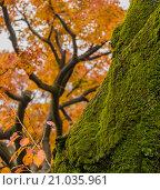 Зеленый мох на старом дереве в осеннем лесу. Стоковое фото, фотограф Юрий Александров / Фотобанк Лори