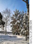 Купить «Зима в лесу Тюменской области», фото № 21088509, снято 2 января 2016 г. (c) Александр Тараканов / Фотобанк Лори