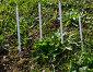 Термометры для измерения температуры почвы, эксклюзивное фото № 21405697, снято 12 ноября 2015 г. (c) Вячеслав Палес / Фотобанк Лори