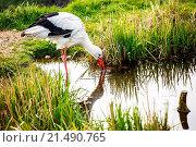 Купить «White stork hunting», фото № 21490765, снято 13 апреля 2013 г. (c) easy Fotostock / Фотобанк Лори