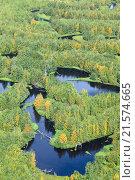 Купить «Заболоченный лес осенью, вид сверху», фото № 21574665, снято 21 августа 2015 г. (c) Владимир Мельников / Фотобанк Лори