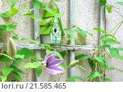 Купить «Facade greening», фото № 21585465, снято 22 сентября 2019 г. (c) easy Fotostock / Фотобанк Лори