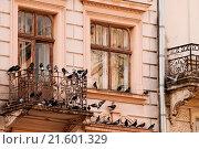 Купить «old window and a balcony with pigeons. close-up», фото № 21601329, снято 16 декабря 2019 г. (c) easy Fotostock / Фотобанк Лори
