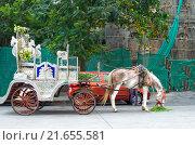 Лошадь запряженная в карету для прогулки по городу Мумбаи. Стоковое фото, фотограф Наталья Богуцкая / Фотобанк Лори