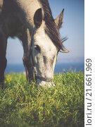Купить «beautiful light horse grazes young», фото № 21661969, снято 27 июня 2019 г. (c) PantherMedia / Фотобанк Лори