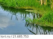 Заросшие зеленые берега реки Москва, Можайский район. Стоковое фото, фотограф Alex Ryabis / Фотобанк Лори