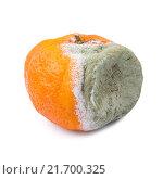 Купить «Мандарин с плесенью», фото № 21700325, снято 30 декабря 2015 г. (c) Алёшина Оксана / Фотобанк Лори