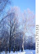 Зима, деревья. Стоковое фото, фотограф Sergey  Ivanov / Фотобанк Лори