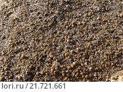 "Купить «Detail of the plant ""oceanic Posidonia""», фото № 21721661, снято 15 декабря 2018 г. (c) PantherMedia / Фотобанк Лори"