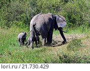 Купить «Слон с детенышами в естественной среде обитания, Африканская саванна», фото № 21730429, снято 2 января 2012 г. (c) Эдуард Кислинский / Фотобанк Лори
