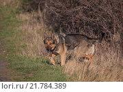 Купить «nature animal mammal pet scenery», фото № 21784389, снято 18 августа 2019 г. (c) PantherMedia / Фотобанк Лори