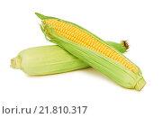 Купить «Два спелых початка кукурузы с зелеными листьями на белом фоне (изолировано)», фото № 21810317, снято 6 декабря 2019 г. (c) Самохвалов Артем / Фотобанк Лори