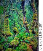 Купить «New Zealand, rain forest, jungle, moss, wood, forest, trees, mood, fairy tale, magic wood, New Zealand, south island,», фото № 21843281, снято 20 апреля 2014 г. (c) age Fotostock / Фотобанк Лори