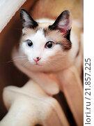 Кошка сидит на радиаторе отопления. Стоковое фото, фотограф Mark Agnor / Фотобанк Лори