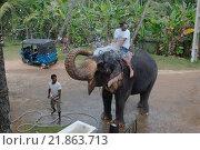 Купить «Слон обливает водой человека сидящего сверху, Hikkaduwa, Шри-Ланка, Южная Азия», фото № 21863713, снято 14 декабря 2018 г. (c) Некрасов Андрей / Фотобанк Лори