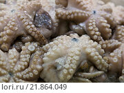 Купить «Background of fresh octopus for sale at a farmers' market», фото № 21864049, снято 8 мая 2014 г. (c) Наталья Волкова / Фотобанк Лори