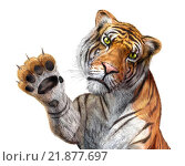 Купить «Tiger close up, facing the viewer, with the right hand up and claws.», иллюстрация № 21877697 (c) PantherMedia / Фотобанк Лори