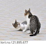 Две играющие кошки. Стоковое фото, фотограф Павел Чайкин / Фотобанк Лори