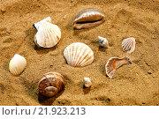Купить «Ракушки на песке», фото № 21923213, снято 16 января 2016 г. (c) Стивен Жингель / Фотобанк Лори