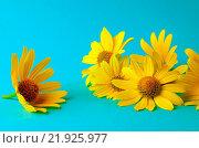 Купить «coneflower», фото № 21925977, снято 9 июля 2020 г. (c) easy Fotostock / Фотобанк Лори