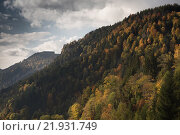 Купить «Freiburg, Germany, view over forested mountains in Hoellental», фото № 21931749, снято 9 октября 2015 г. (c) Caro Photoagency / Фотобанк Лори
