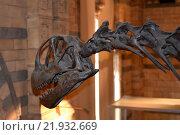 Портрет динозавра  в профиль (2015 год). Редакционное фото, фотограф Юлия Бубличенко / Фотобанк Лори