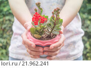 Купить «Hand on flower plant in pot», фото № 21962241, снято 22 октября 2018 г. (c) PantherMedia / Фотобанк Лори