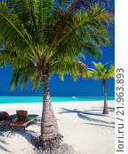 Купить «Deck chairs under umrellas and palm trees on a beach», фото № 21963893, снято 21 марта 2019 г. (c) PantherMedia / Фотобанк Лори
