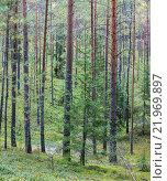Купить «Сосновый бор в Гдовском районе Псковской области», фото № 21969897, снято 6 сентября 2014 г. (c) Абрамова Ксения / Фотобанк Лори