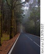 Заасфальтированная дорога в лесу. Стоковое фото, фотограф Юрий Александров / Фотобанк Лори