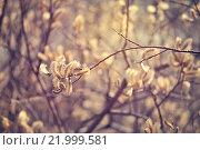 Купить «Ветки цветущей ивы», фото № 21999581, снято 16 июля 2019 г. (c) Зезелина Марина / Фотобанк Лори