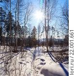 Солнечный зимний лес на краю города. Стоковое фото, фотограф Тимофеев Владимир / Фотобанк Лори
