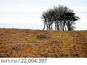 Купить «bare-branched group of trees», фото № 22004397, снято 16 июня 2019 г. (c) easy Fotostock / Фотобанк Лори