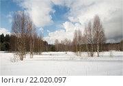 Зимний пейзаж с березами. Стоковое фото, фотограф Олег Пученков / Фотобанк Лори