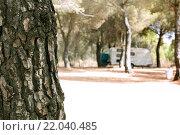 Купить «Tree in the forest and caravan», фото № 22040485, снято 21 августа 2019 г. (c) easy Fotostock / Фотобанк Лори