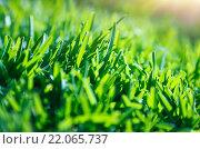 Купить «Green grass background», фото № 22065737, снято 25 апреля 2019 г. (c) PantherMedia / Фотобанк Лори