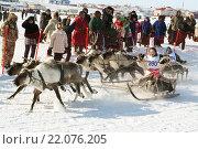Гонки на оленьих упряжках (2012 год). Редакционное фото, фотограф Юрий Соболев / Фотобанк Лори