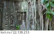 Купить «Та Пром храм в Ангкор-Ват, Камбоджа», видеоролик № 22138213, снято 10 марта 2016 г. (c) Михаил Коханчиков / Фотобанк Лори