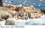 Купить «Настоящий снег, айсберг и четыре вида пингвинов в пингвинариуме в Лоро-парке, Тенерифе, Канарские острова, Испания», видеоролик № 22169053, снято 5 февраля 2016 г. (c) Кекяляйнен Андрей / Фотобанк Лори