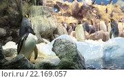 Купить «Колонии пингвинов в пингвинариуме Планета Пингвинов в Лоро-парке, Тенерифе, Канарские острова, Испания», видеоролик № 22169057, снято 5 февраля 2016 г. (c) Кекяляйнен Андрей / Фотобанк Лори