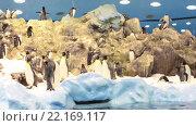 Купить «Пингвинариум с естественными полярными условиями проживания пингвинов. Лоро-парк, Тенерифе, Канарские острова, Испания», видеоролик № 22169117, снято 5 февраля 2016 г. (c) Кекяляйнен Андрей / Фотобанк Лори