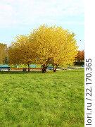 Купить «Жёлтая липа на набережной», фото № 22170365, снято 18 сентября 2014 г. (c) Бурухин Никита Юрьевич / Фотобанк Лори