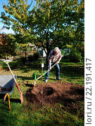 Купить «Prunus avium, Süßkirsche, Sweet cherry tree, Pflanzung, Gießmulde formen», фото № 22191417, снято 24 сентября 2018 г. (c) age Fotostock / Фотобанк Лори