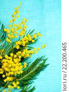 Купить «Желтые цветы мимозы на бирюзовой льняной скатерти», фото № 22200465, снято 10 марта 2016 г. (c) Зезелина Марина / Фотобанк Лори