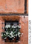 Macetas con flores en la ventana de una casa de Albarracín, Teruel Province, Aragon, Spain. Стоковое фото, фотограф Fco. Javier Sobrino / age Fotostock / Фотобанк Лори