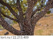 Дерево с жвачками. Стоковое фото, фотограф Василий Вострухин / Фотобанк Лори